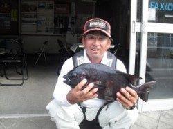 有田の大磯、最大45cmの石鯛をキャッチ