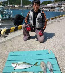 神谷 カゴでツバス・イサギ エギでアオリイカの釣果