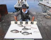 黒島の筏で良型のアイゴ
