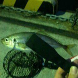加太漁港 常夜灯付近のアジングでアジ&メバル