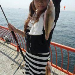 平磯海づり公園〜ベラ・アイナメ大漁、豆アジも時合あり