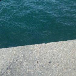 加太にてタコの釣果〜タコエギで先端部で探って釣れました♪