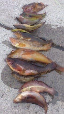 明石港 投げ&探り釣りで、魚種多彩に楽しめる