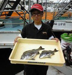岸和田沖一文字 紀州釣り釣果 チヌ〜37cm