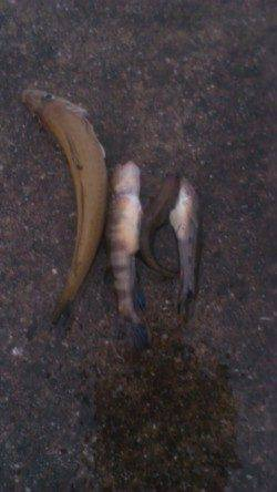 仕事終わりに1時間ほど釣りでリフレッシュ 兵庫突堤の投げ釣り