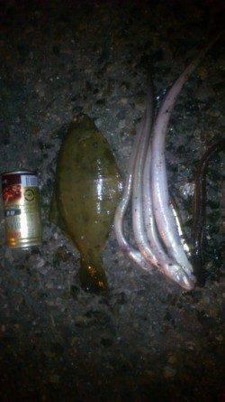 兵庫突堤 投げ釣りで24cmの肉厚カレイ アナゴも