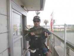 南港海釣り公園 写真のチヌの他にイワシ・アジも