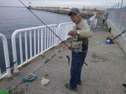 大阪南港魚つり園サビキのアジ午前中に釣れていました