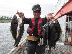 尼崎市立魚つり公園 イガイの落とし込みでチヌ〜50.5cm5枚