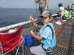 尼崎市魚つり公園 サビキでイワシ・サッパの釣果