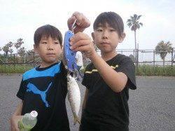 南港海釣り公園 カタクチイワシとサッパ中心の釣果