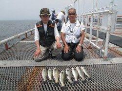 尼崎市立魚つり公園 ハネ・セイゴ朝の満潮潮どまりまでにアタリが集中