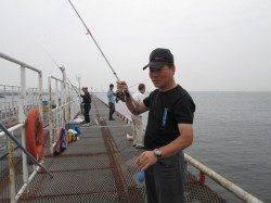 尼崎市立魚つり公園  サビキでイワシが4連!
