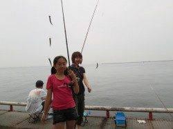 尼崎市立魚つり公園11〜14時イワシの入れ食いタイム、一回りサイズもUP