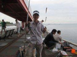 尼崎市立魚つり公園で40cmの大サバ〜引きが強く楽しいです♪