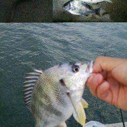 海老江の河川敷公園でウナギ釣り☆キビレ40UPもゲット!