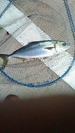 北港魚つり公園 ショアジギングでハマチ50cm☆