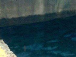 助松埠頭ウキ釣りでメバル、棚は1〜1ヒロ半でした