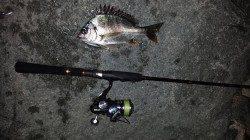 舞洲周辺でのチニング〜プラグでリアクションで釣りました