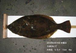 久美浜にてヒラメ72㎝の釣果