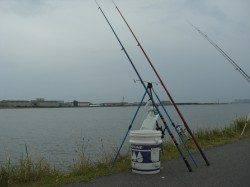 悪天候の中、うなぎ狙いのぶっこみ釣り 終了間際に待望の一匹