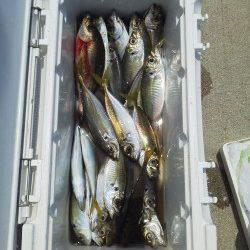 塩谷から渡船でケーソンへ〜サビキの遠投でアジ好釣果