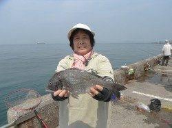 北港釣り公園 カゴ釣りでチヌ&グレ