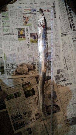芳養漁港 ルアーゲームの思わぬ外道はタチウオ1mオーバー