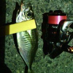 舞洲周辺雨後の強風の中アジング釣行、かなり渋かったです・・・