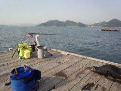 和歌山県三尾川にてアオリイカ釣り〜キレイにウキが沈み1760gゲット!