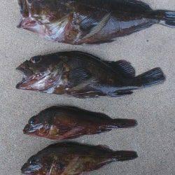 江井ヶ島にて穴釣り〜最初に25cmのデカガシラ