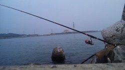 日高川河口に夕方の上げ潮狙いで釣行〜本命のチヌゲット♪