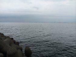 樽井漁港夕マヅメの小一時間キス調査に行ってきました