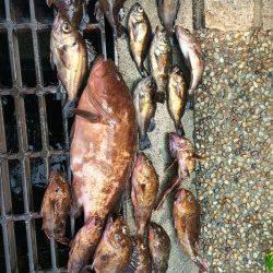 貝塚 シラサをエサに穴釣り〜ガシラ・メバルのほか36センチのアコウも!
