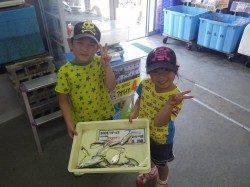 芳養漁港 サビキでアジの釣果出てます