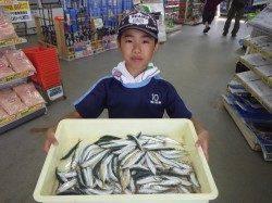 芳養漁港 サビキでイワシ・豆アジ・チャリコの釣果