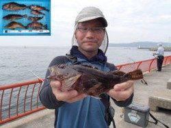 平磯海づり公園 ガシラ29cmを頭に5尾とアイナメの釣果