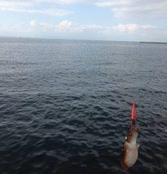 雑賀崎でエギング〜渋い状況の中コウイカの釣果