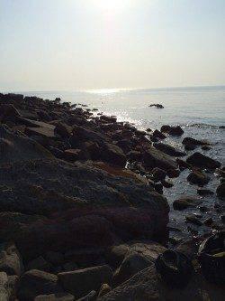 谷川漁港 日中の穴釣り感覚のメバリングでムラソイ