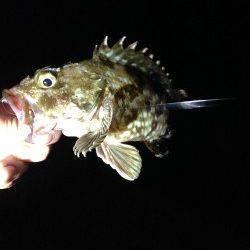 アジ狙いでしたが…夜の淡輪漁港でルアーゲーム