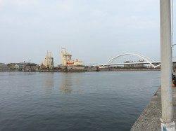 岸和田周辺釣行〜ライトワインドでハゼ爆釣