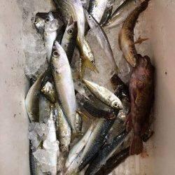 田ノ浦漁港でサビキ&胴突 魚種多彩で楽しめました♪
