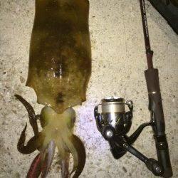 須磨でエギング〜シャクリ続けて苦節4ヶ月やっと春イカ釣れました!