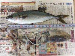 武庫川尻一文字 イカはイマイチながらもジグでハマチゲット