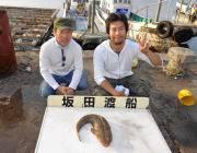 黒島の筏 のませ釣りでマゴチ53cm!