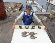 黒島の筏でナイスサイズのカワハギ釣果