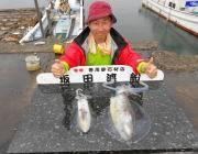 黒島の磯のアオリイカ釣果〜3人で11パイ