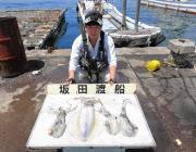 黒島の磯 ヤエンとエギングで1.8kgまでのアオリを4ハイ