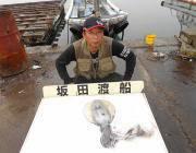 黒島の筏 ヤエンでアオリイカ1.3kg