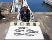 鷹島のカンドリ フカセ釣りでグレ